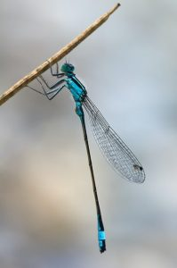 The dragonfly having a rest on the twig.